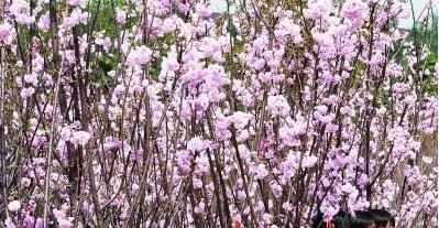 春天的美丽景色
