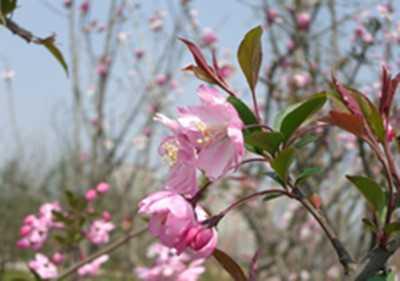 春暖花开 踏春去
