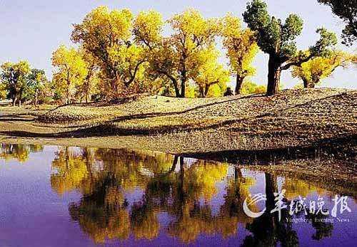 推荐地:新疆木垒  地理位置:木垒胡杨林位于古尔班